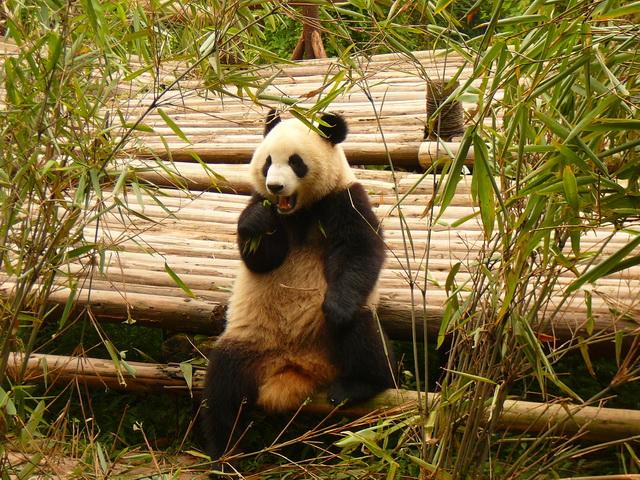 г. Чэнду, Китай