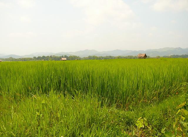 Luang Namtha, Lao