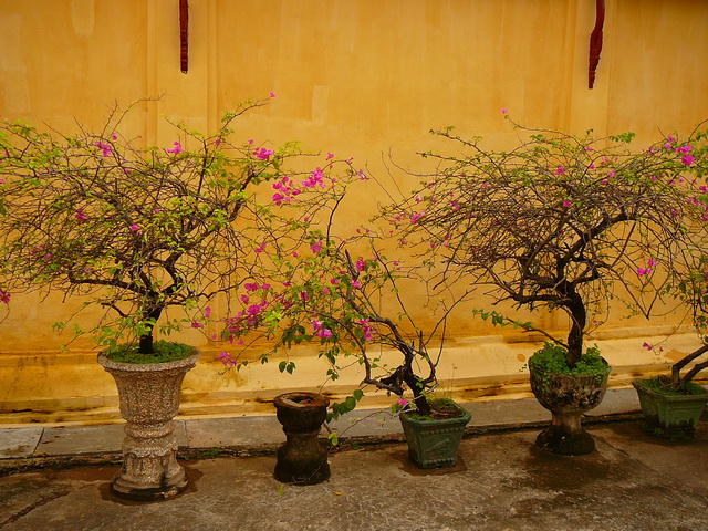 Flowers in the Laos