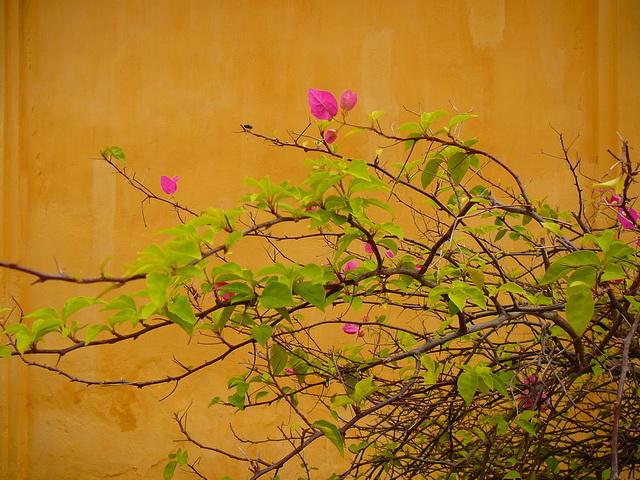 Wieng Jan ,Laos