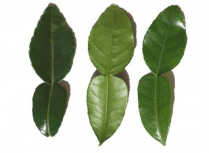 Caffir lime, тайская кухня