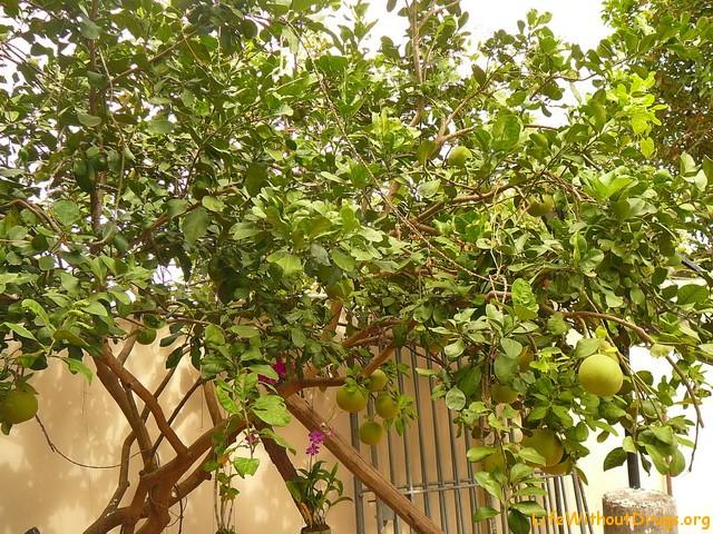 Тропические фрукты в Камбоджа