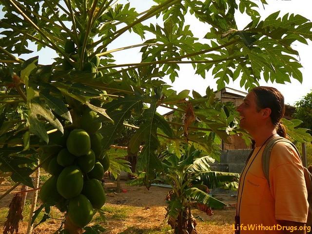 Кеп, Камбоджа, плантация фруктов
