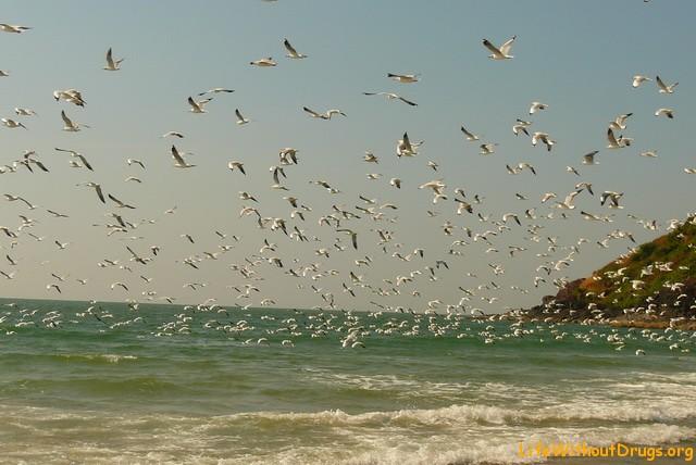 Paradise, Гоа, фото