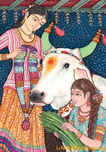 Корова в Индии - священное животное
