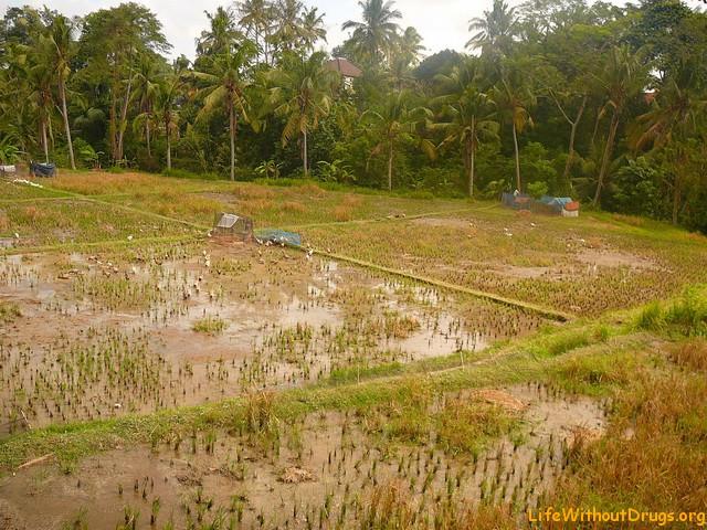 Снять дом в Убуде, Бали