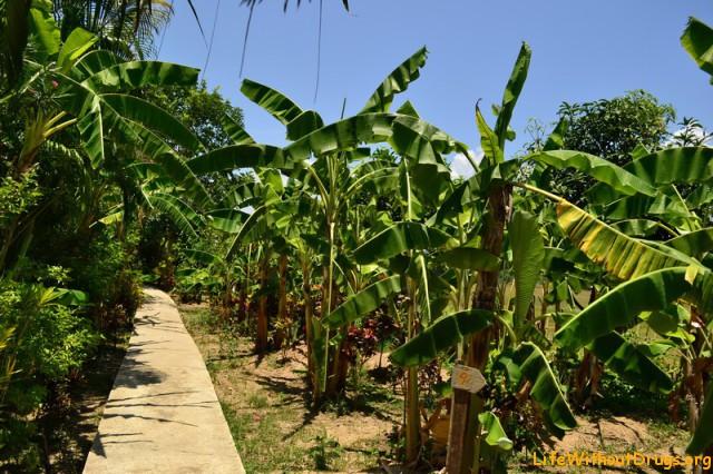 Ферма и гостевой дом, где мы жили в Пае