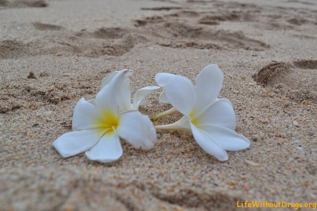 На острове Ко Ланта