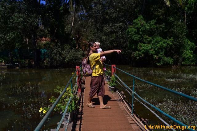 Индийские специи на плантации в Гоа