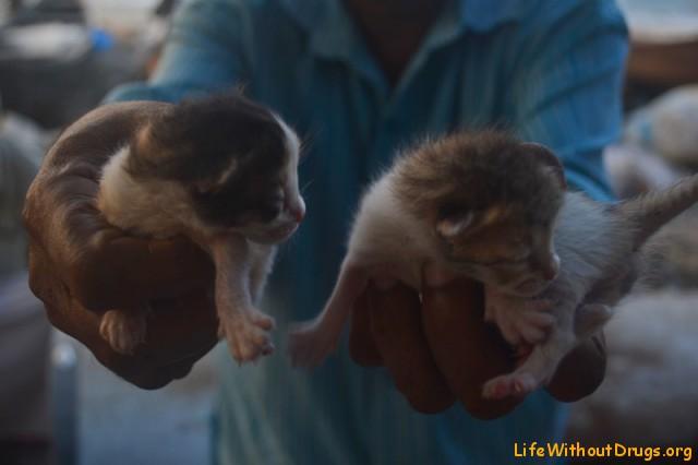 Котята в Кочи