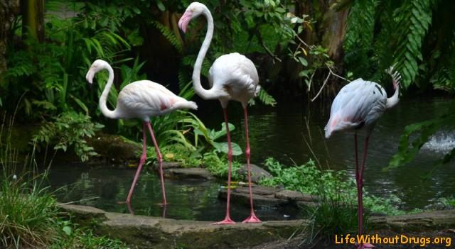 Фламинго фото