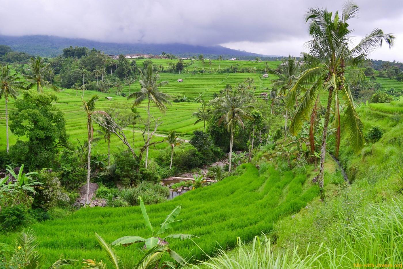 Самые красивые рисовые террасы на Бали