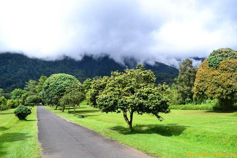 Бедугул. Живем на острове Бали, среди клубничных плантаций, святых озер и тумана.