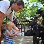 Бангкок для детей. Зоопарк Дусит и парк Люмпини.