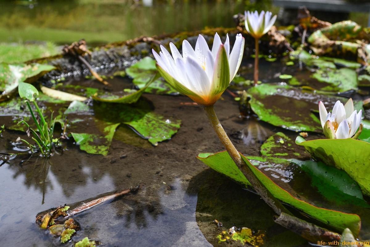 Мое общение с природой. Солнце, вода, земля и мудрые деревья.