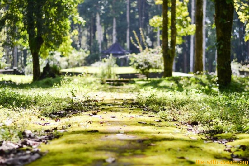 Как общаться с природой. Стихии. Солнце, вода, земля и деревья.