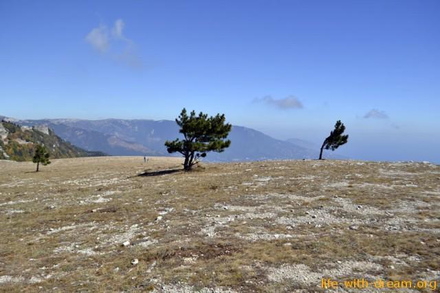 Забавные низкорослые деревья сетуют о суровом климате