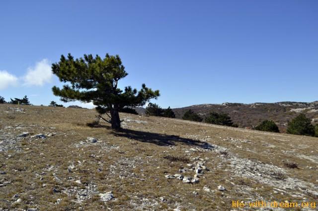 Невысокие деревья на Горе