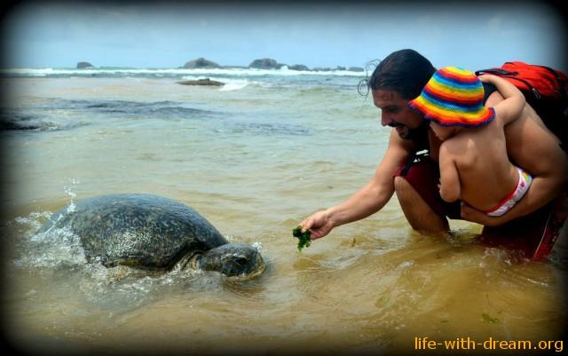 Большая морская черепаха (Шри-Ланка)