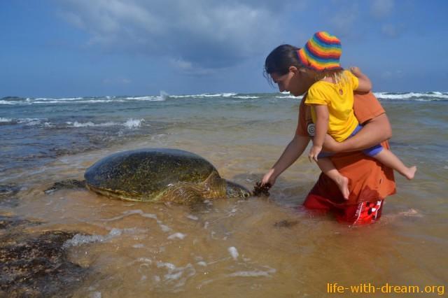 Кормим черепаху в Хиккадува