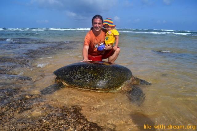Большая черепаха на Hikkaduwa Beach