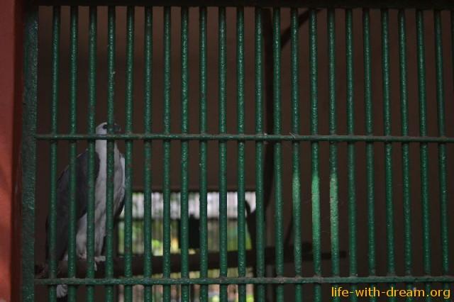 Клетка в индийском зоопарке. Тривандрум.