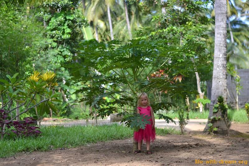 Лучики на Бали