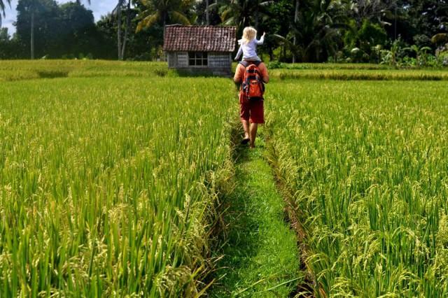 Прогулки по рисовым полям