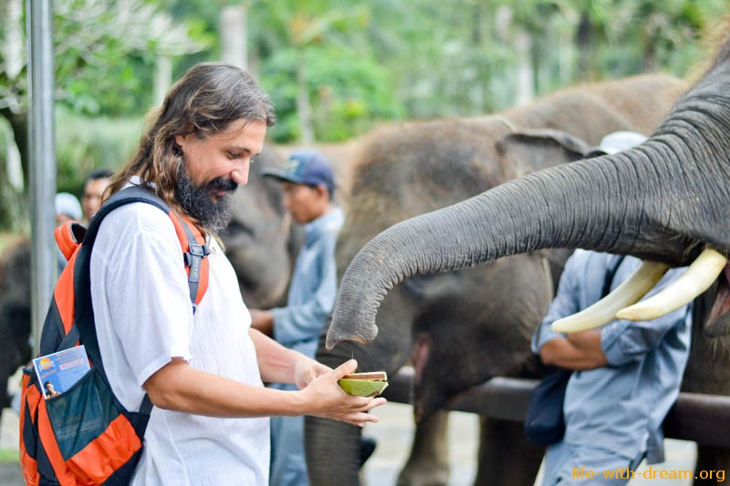 elephant-safari-park-3700