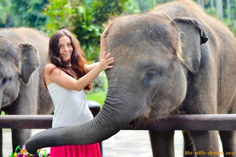 elephant-safari-park-3740