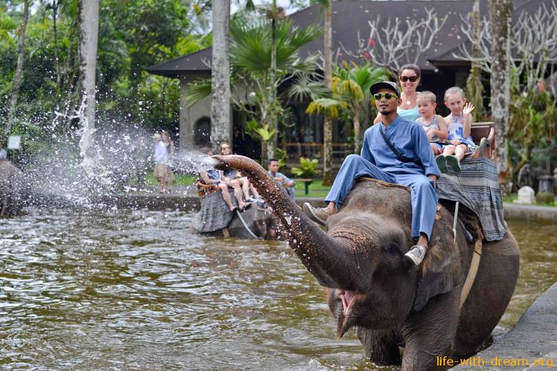 elephant-safari-park-3796