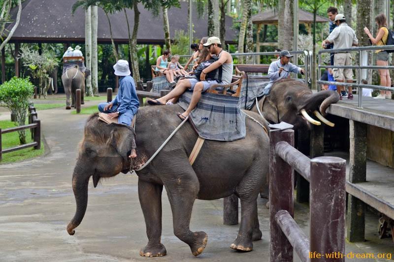 elephant-safari-park-3814