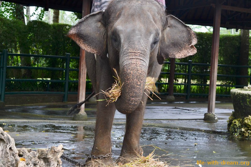 elephant-safari-park-3872