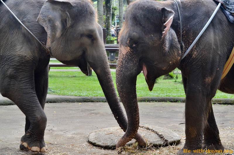 elephant-safari-park-3877