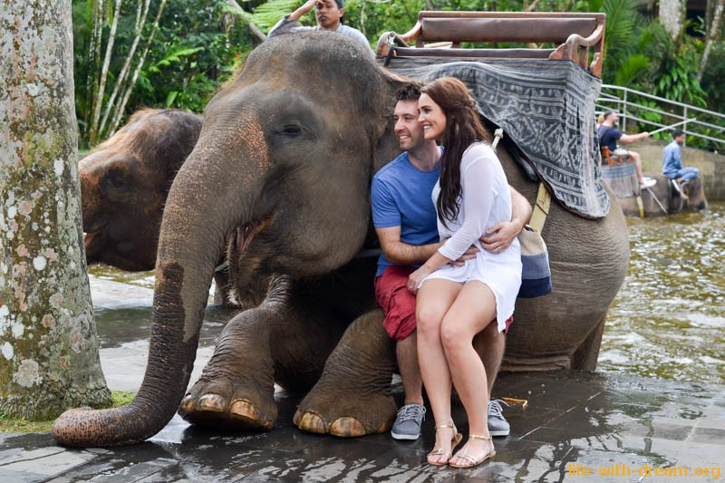 elephant-safari-park-3896