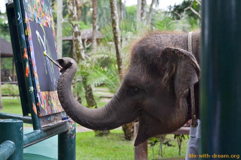 elephant-safari-park-4084