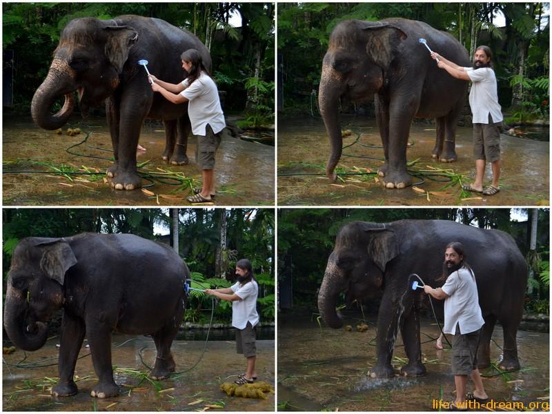 у слоников