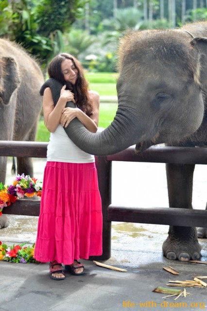 elephant-safari-park-3749
