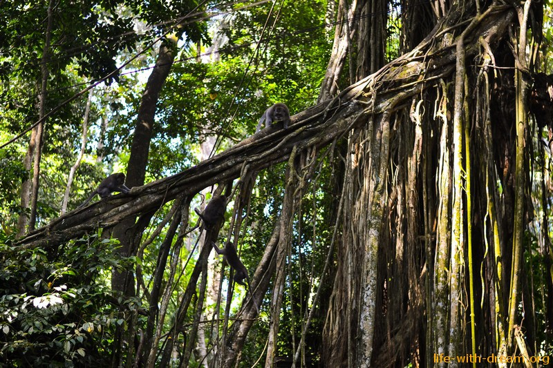 Убуд - любимый городок Бали лес обезьян на Бали