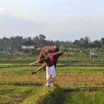 10 причин, почему мы живем на Бали