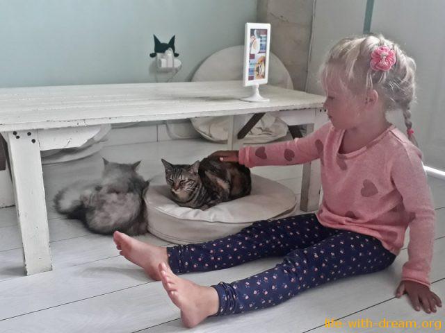 Кошкин день в нашей семье
